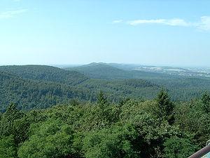 El espeso bosque de Teotoburgo visto desde las alturas